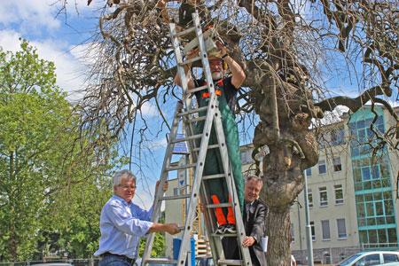 Kunst entsteht im öffentlichen Raum - Georg Becker schafft Baumskulptur an der Buchmühle